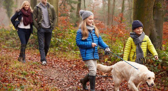 Осенний досуг с собакой. Список отличных идей