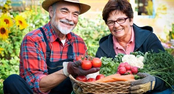 Родник здоровья — это чистые овощи: как их выращивать?