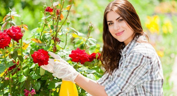 ТОП-7 самых распространенных болезней розовых кустов