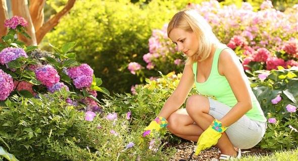 Новичкам на заметку: рекомендации опытного садовода по созданию цветника