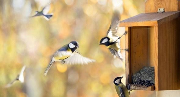 Позаботимся о птицах: делаем кормушки своими руками