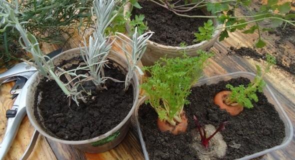 Пусть лето вернется в дом! Выращиваем зелень и овощи на подоконнике
