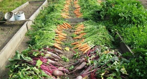 Натуральная  защита растений от болезней и вредителей