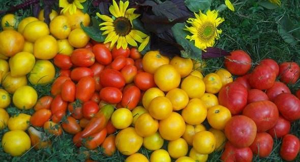 Раз — томат, два — томат