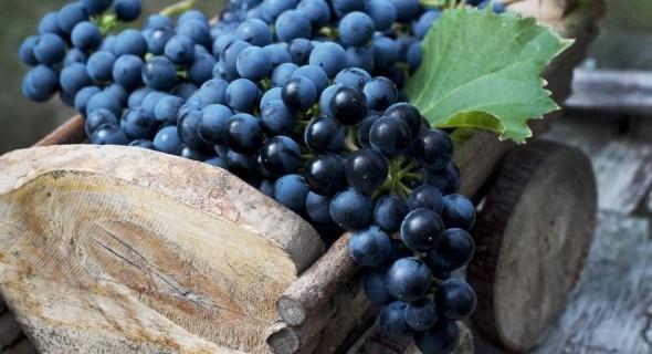 Хранение винограда: личный опыт