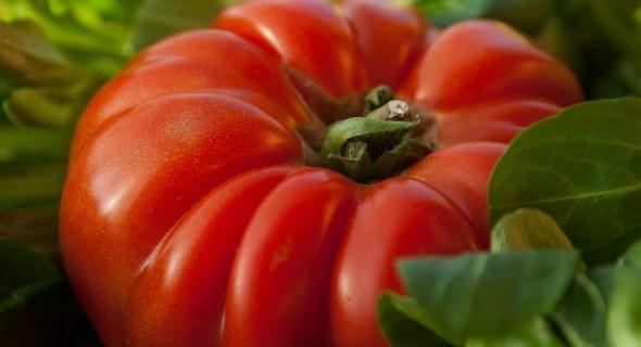 В мире крупноплодных томатов