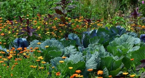 Смешанные посадки трав, цветов и овощей: вместе им не тесно