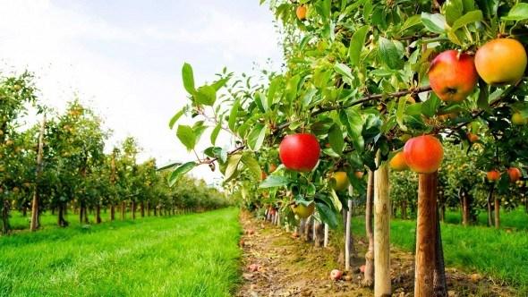 Защите сада от вредителей