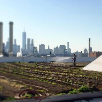 Нью -Йорк как на ладони с крыши Brooklyn Grange