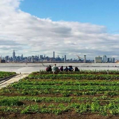 ферма Brooklyn Grange