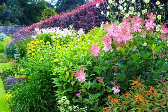 Дизайн садовых цветников