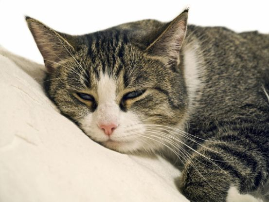 кот болеет