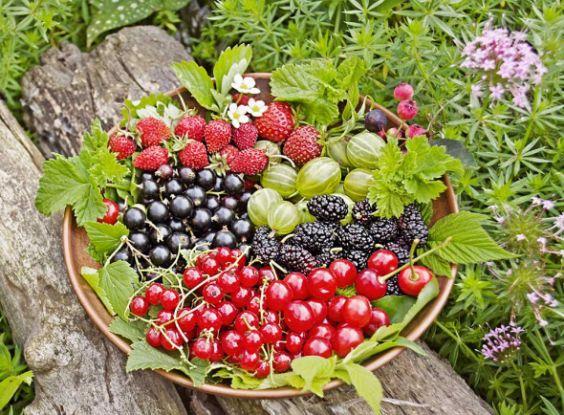Какие сорта ягодных культур выбрать для дачи или своего сада