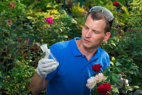 Средства защиты роз: какие лучше выбрать?