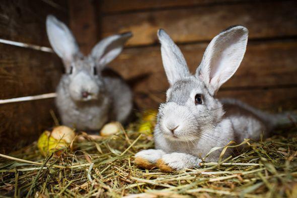 Здоровье кроликов: как избежать распространённых заболеваний?