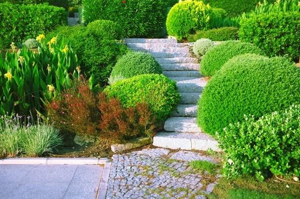Декоративные кустарники: виды, формы, гармоничное размещение в дизайне сада