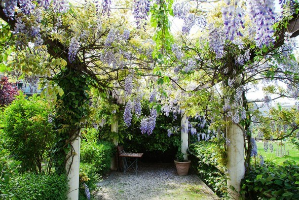 Вертикальное озеленение: создаем красивую композицию