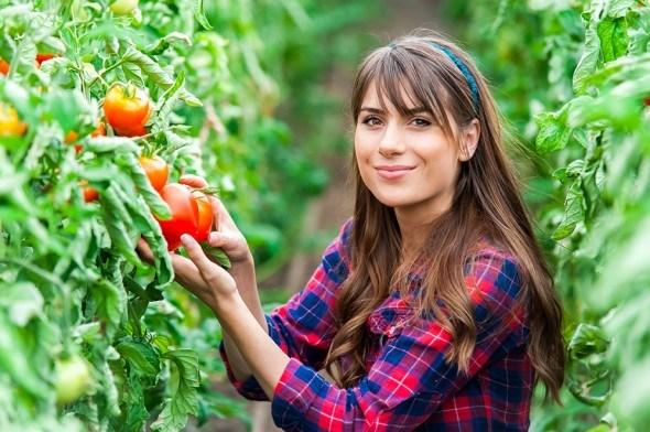 Девушка томаты теплица