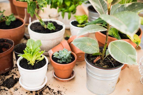 Комнатные растения в тени