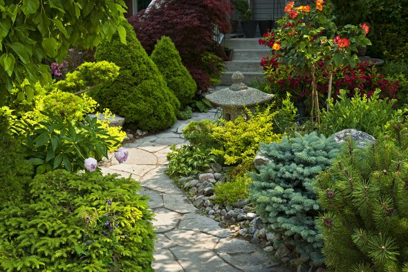 Как правильно выращивать почвопокровные хвойные растения?