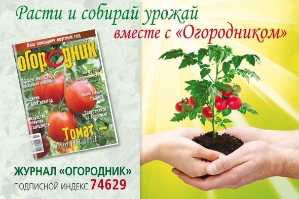 Правила проведения конкурса «Мой любимый сорт» в журнале «Огородник»