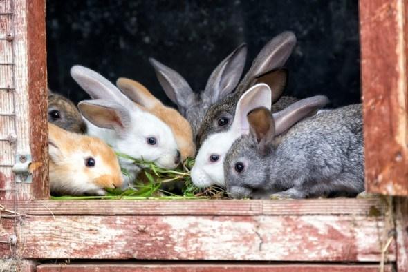 Здоровые мамы — здоровые дети: сбалансированное питание для крольчих и молодняка