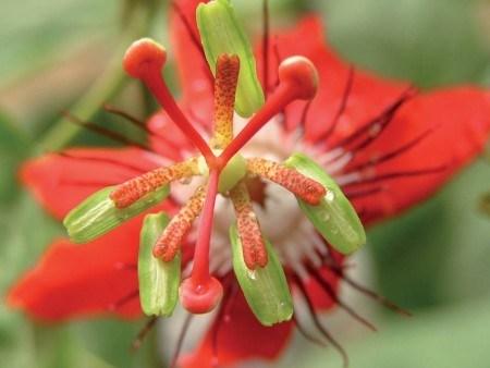 Необычные цветы в Potager Etraordinaire