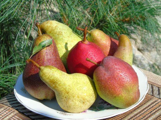 Выбираем лучшие груши для своего сада