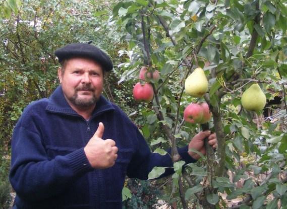 Черенок яблони прижился на ветке груши