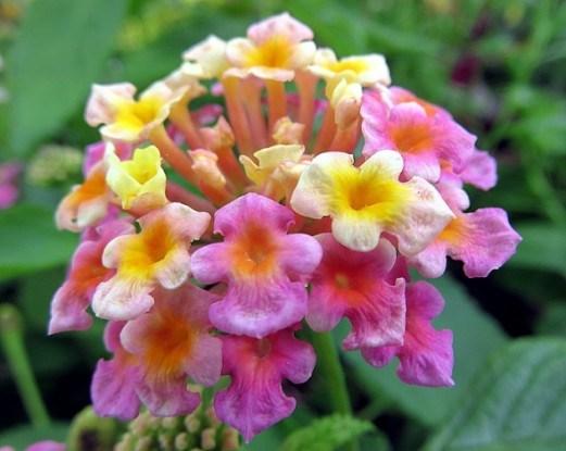 Тропические цветы и растения в горшечной культуре