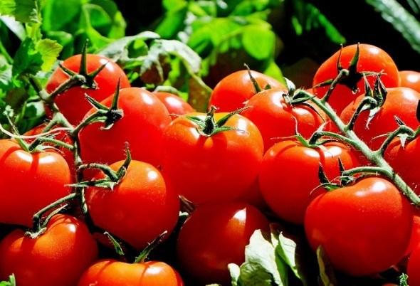 Перспективные сорта и гибриды овощей