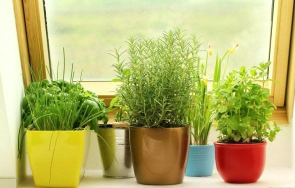 Как в домашних условиях вырастить зелень 503