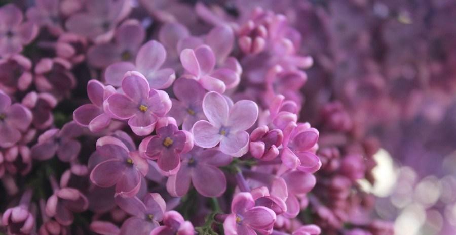 Цветники в мае