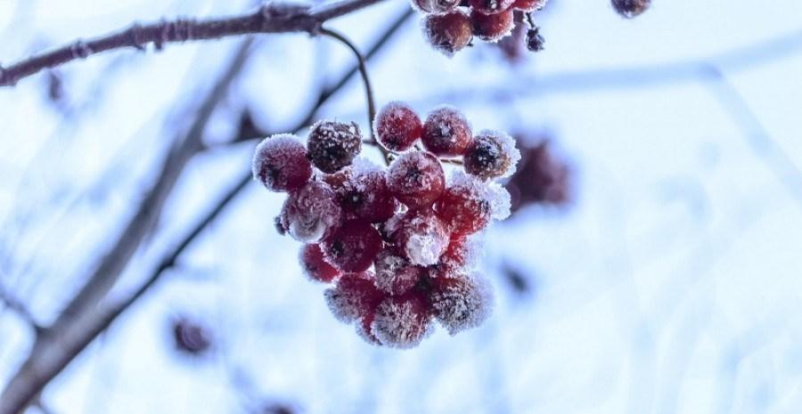 В студеную зимнюю пору: защищаем деревья в стужу и оттепель…