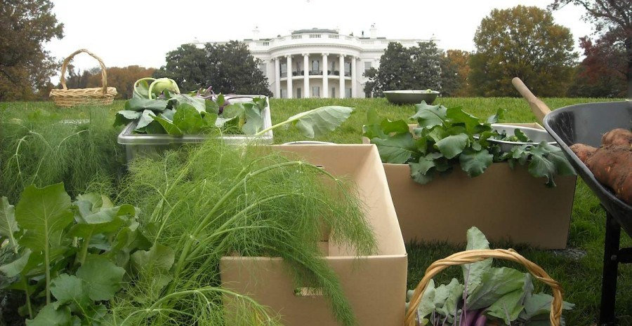 Огород в Белом Доме